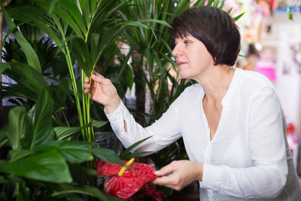 Diesen neu entdeckten Fehler begehen fast alle im Umgang mit Garten- und Zimmerpflanzen