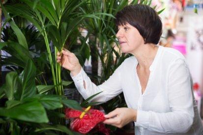 Studien: Zum Schutz vor Erkältungs- und Grippeviren helfen unsere Zimmerpflanzen