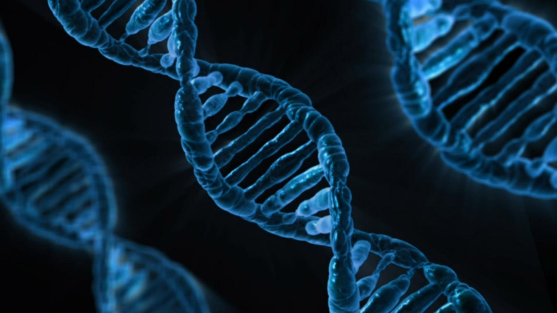 Wirkungen von Linolsäure auf entzündliche Reaktion hängt von Genen
