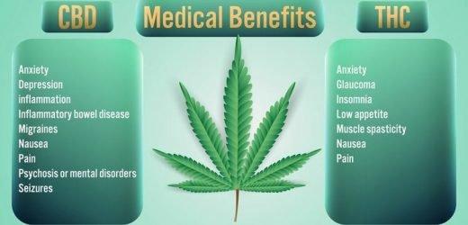 THC mehr wichtig für therapeutische Effekte in cannabis als bisher angenommen