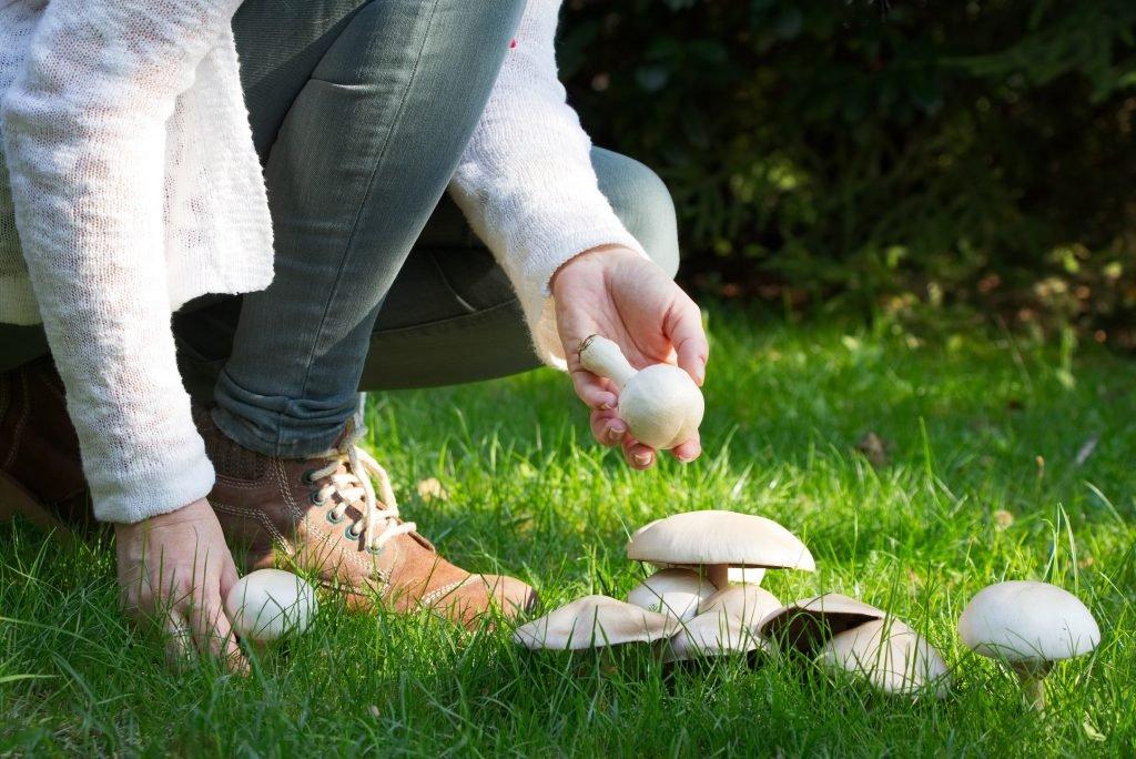 Gehirn-Forschung: Pilz-Konsum hilft dem Gedächtnis auf die Sprünge