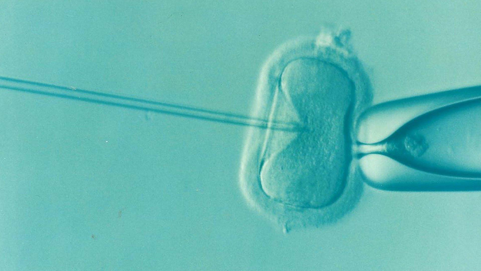Größte Studie von Krebs bei Kindern nach IVF