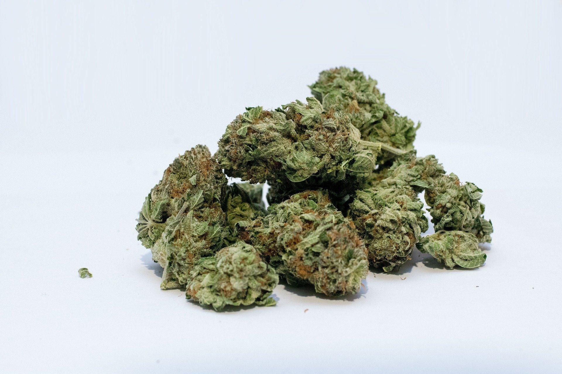 CBD reduziert die Beeinträchtigung durch cannabis