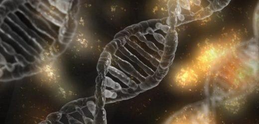 Wie Mutter und Kind die Gene beeinflussen das Geburtsgewicht