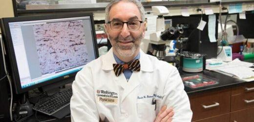 Immunzellen bestimmen, wie schnell bestimmte Tumoren wachsen