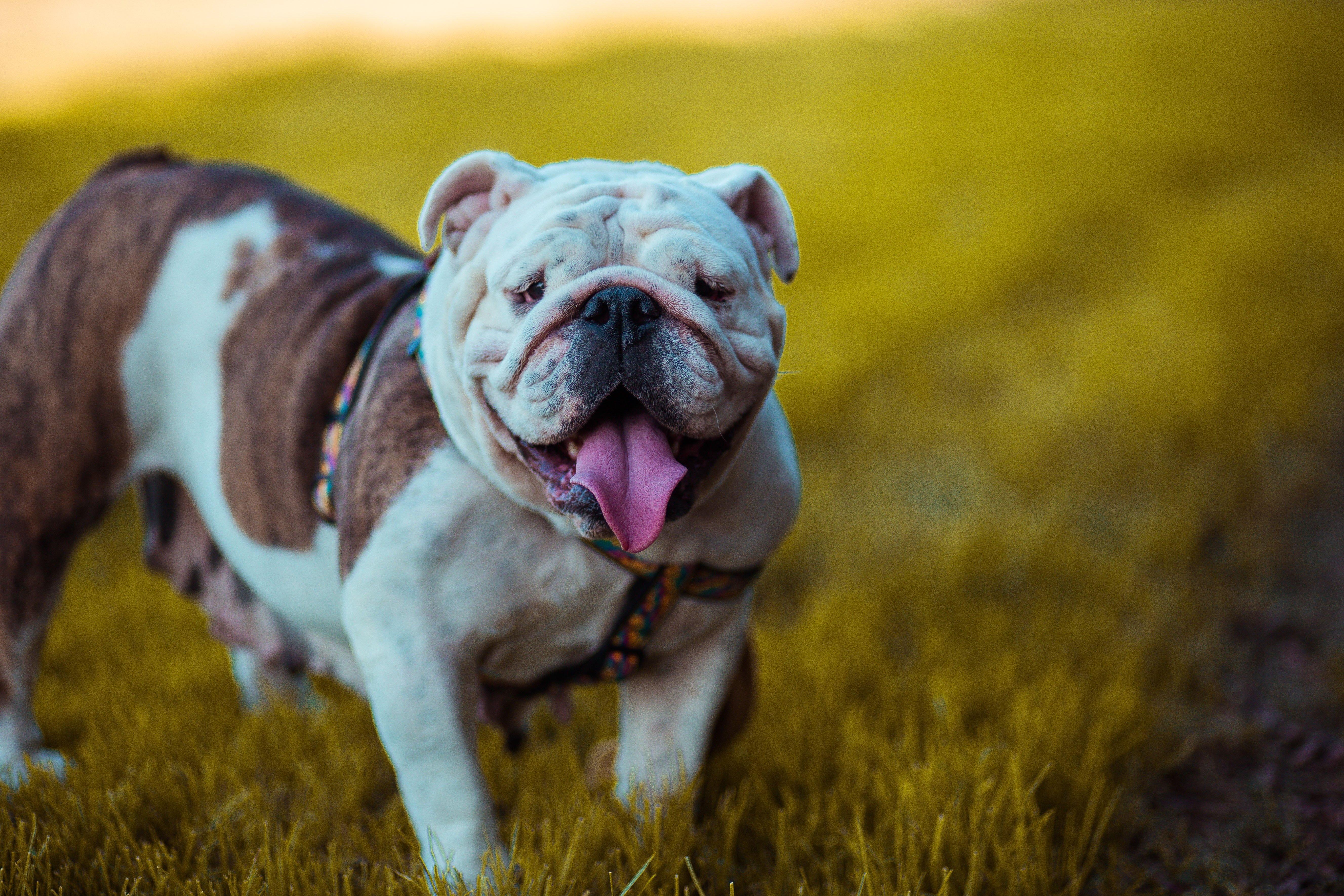 Psychische Gesundheit Vorteile Besitzen, ein Hund zu Holen! Pet Care