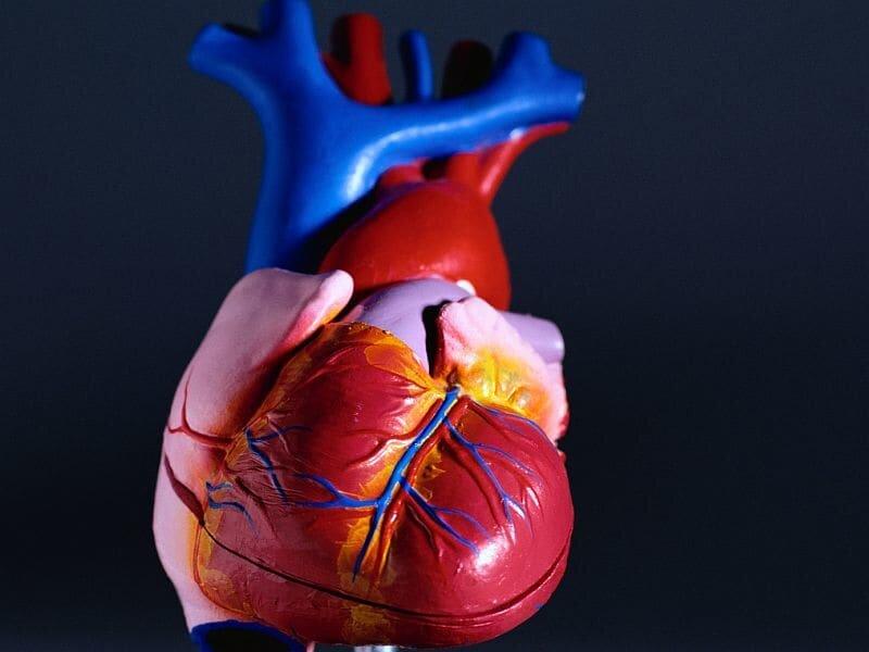Die infektiöse Endokarditis Prävalenz von 26 Prozent bei Patienten, die mit E. faecalis