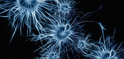 Neurowissenschaftler entdecken neuron geben, das wirkt wie brain metronome