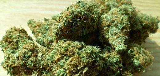Die gesundheitlichen Auswirkungen der Verzehr von Marihuana ist Thema einer neuen Studie