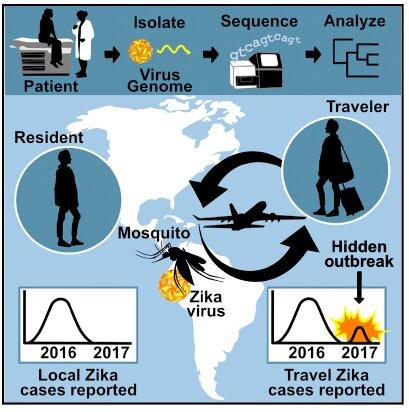 Eine Dunkelziffer Zika Ausbruch im Jahr 2017 erkannt durch Reisen, überwachung und Genetik