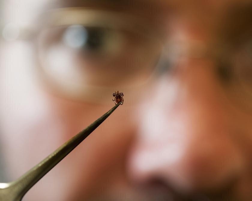 Daten zeigt, Lyme-Bedrohung im Westen weitgehend durch den östlichen Zecken