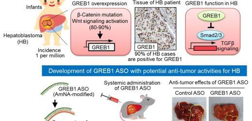 Brustkrebs-gen ein potentielles Ziel für kindheit Leber-Krebs-Behandlung