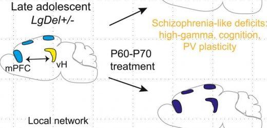 Verhindert das auftreten von Schizophrenie in einem Maus-Modell