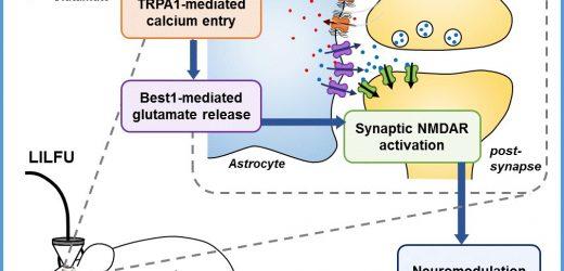 Wie kann Ultraschall Hirnstimulation Heilung Erkrankungen des Gehirns?