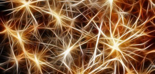 Wissenschaftler werfen ein neues Licht auf die neuronalen Prozesse des Lernens und motorischen Verhaltensweisen