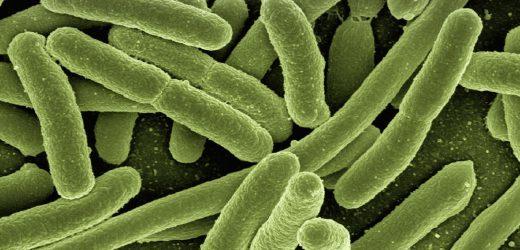 Kupfer Krankenhausbetten töten Bakterien, die Leben retten, findet Studie
