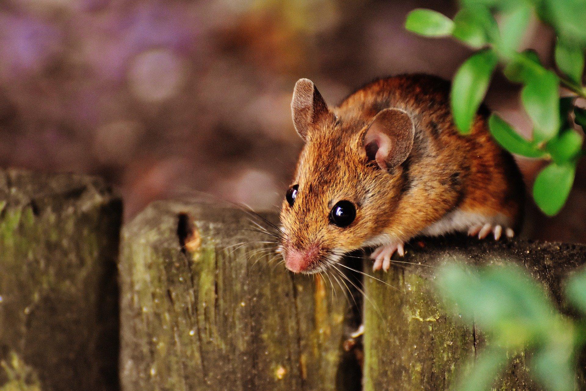 FDA-zugelassenes Medikament zeigt Versprechen gegen ALS in Mäusen