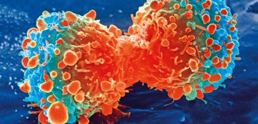 Mögliche Strategie zur Behandlung von Krebs gefunden in der nuklearen Transportproteine