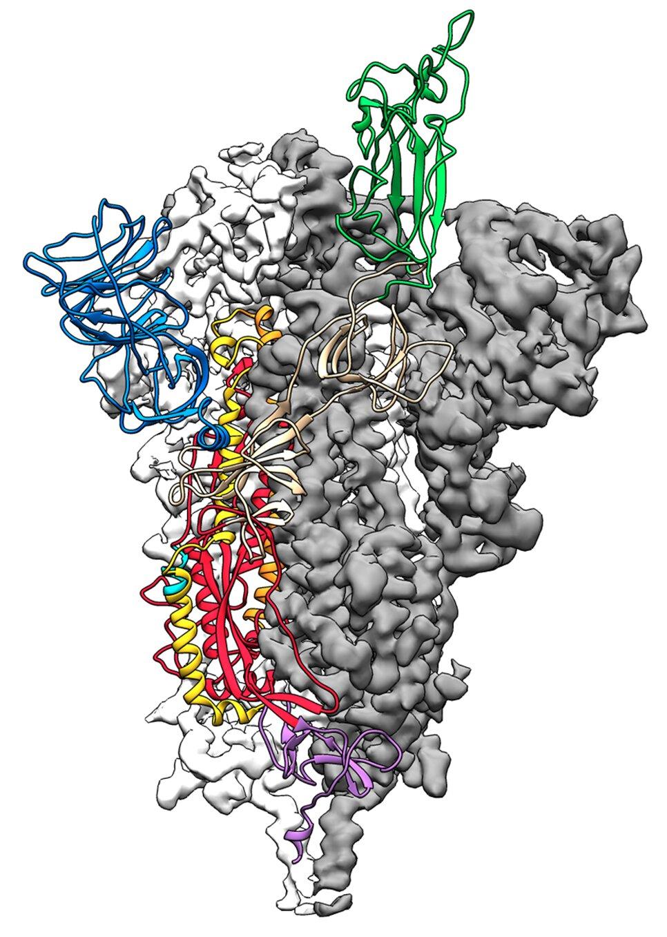 Durchbruch in der coronavirus Forschungsergebnissen in neue Karte zur Unterstützung der Impfstoff-design