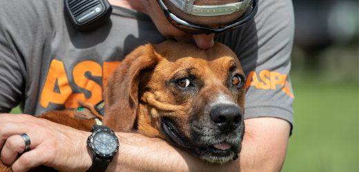 Die Wächter und die ASPCA: das Erreichen Großer Ziele Gemeinsam