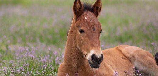 ASPCA Zeugt von Kongress zu Gunsten der Wild Horse und Burro Schutz