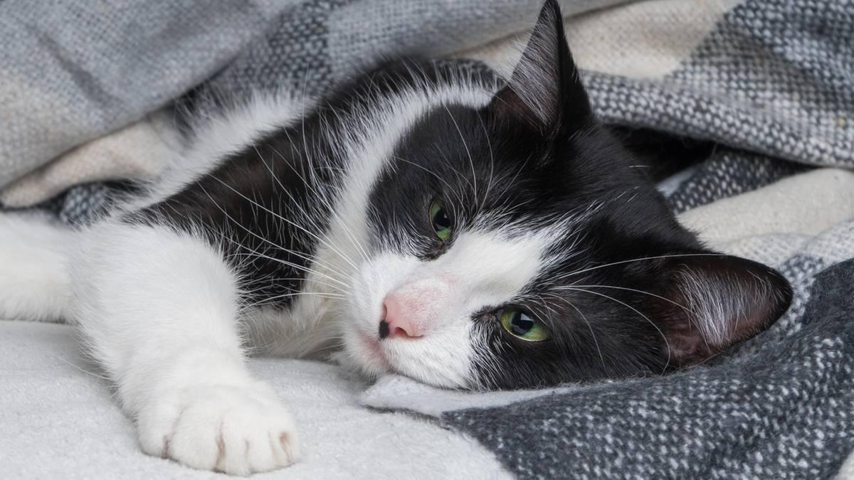 Katze steckt sich bei einem Menschen mit Coronavirus an