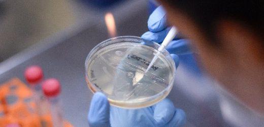 Könnte TB-Impfstoff zu schützen, Sanitäter aus COVID-19?