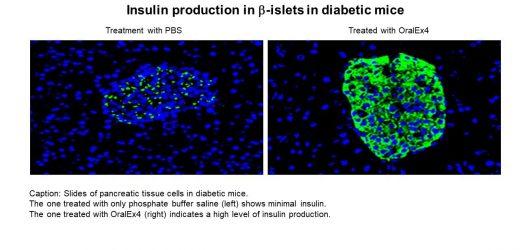 Fettsäuren in Triglyceride als eine effektive Plattform für biologische drug-delivery –