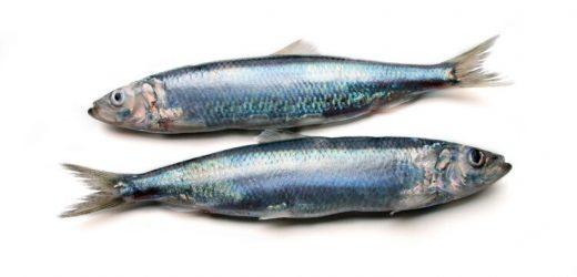 Ernährung: 3 gesunde und ungesunde Fische – Naturheilkunde & Naturheilverfahren Fachportal
