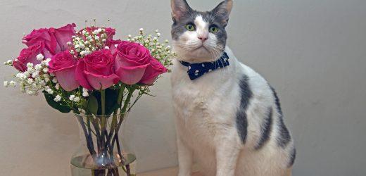 Muttertag Blumensträuße: Was ist Sicher für Haustiere?
