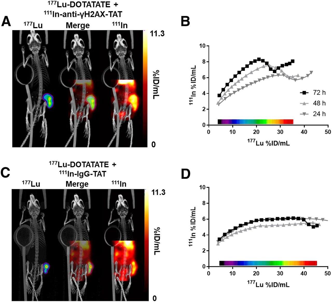 Die molekulare Bildgebung bietet einen Einblick in die Therapie-Ergebnisse für neuroendokrine tumor-Patienten
