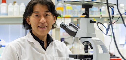 Neue Behandlung für die häufigste form der Muskeldystrophie zeigt Versprechen in Zellen, Tiere