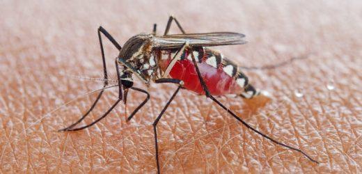 Weitere Ausbreitung des West-Nil-Virus in Deutschland befürchtet – Naturheilkunde & Naturheilverfahren Fachportal