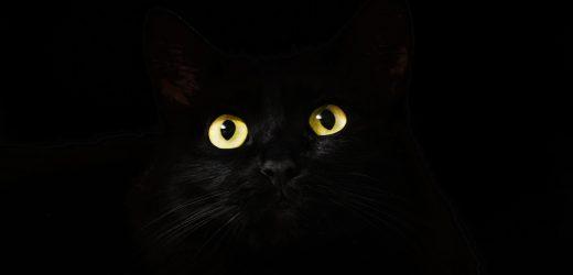 Zwei Katzen sind die ersten US-amerikanischen Haustiere werden krank mit COVID-19