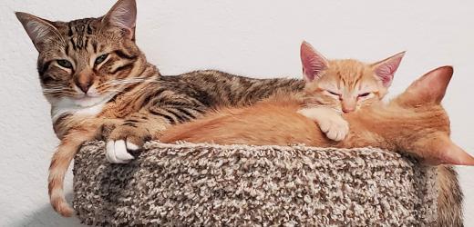 Jeden Tag ist Vatertag für Diese Freundliche Katze