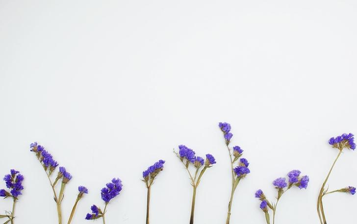 Wussten Sie, Chicorée-Wurzel Hat All Diese Gesundheitlichen Vorteile?