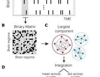 Das Gehirn die funktionelle Organisation verlangsamt nach einer Beziehung Trennung