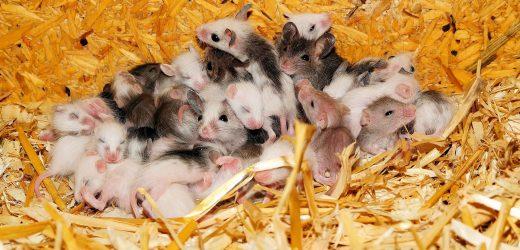 Natrium, das sich zur Regulierung der biologischen Uhr von Mäusen
