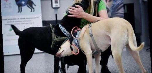 Helsinki setzt Corona-Spürhunde an Flughäfen ein – kommen sie auch nach Deutschland?